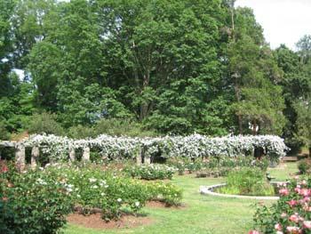 Rose Garden May2007