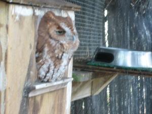 Adorable, sleepy (blurry) owl