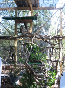 Great Horned Owls in their awesome treehouse