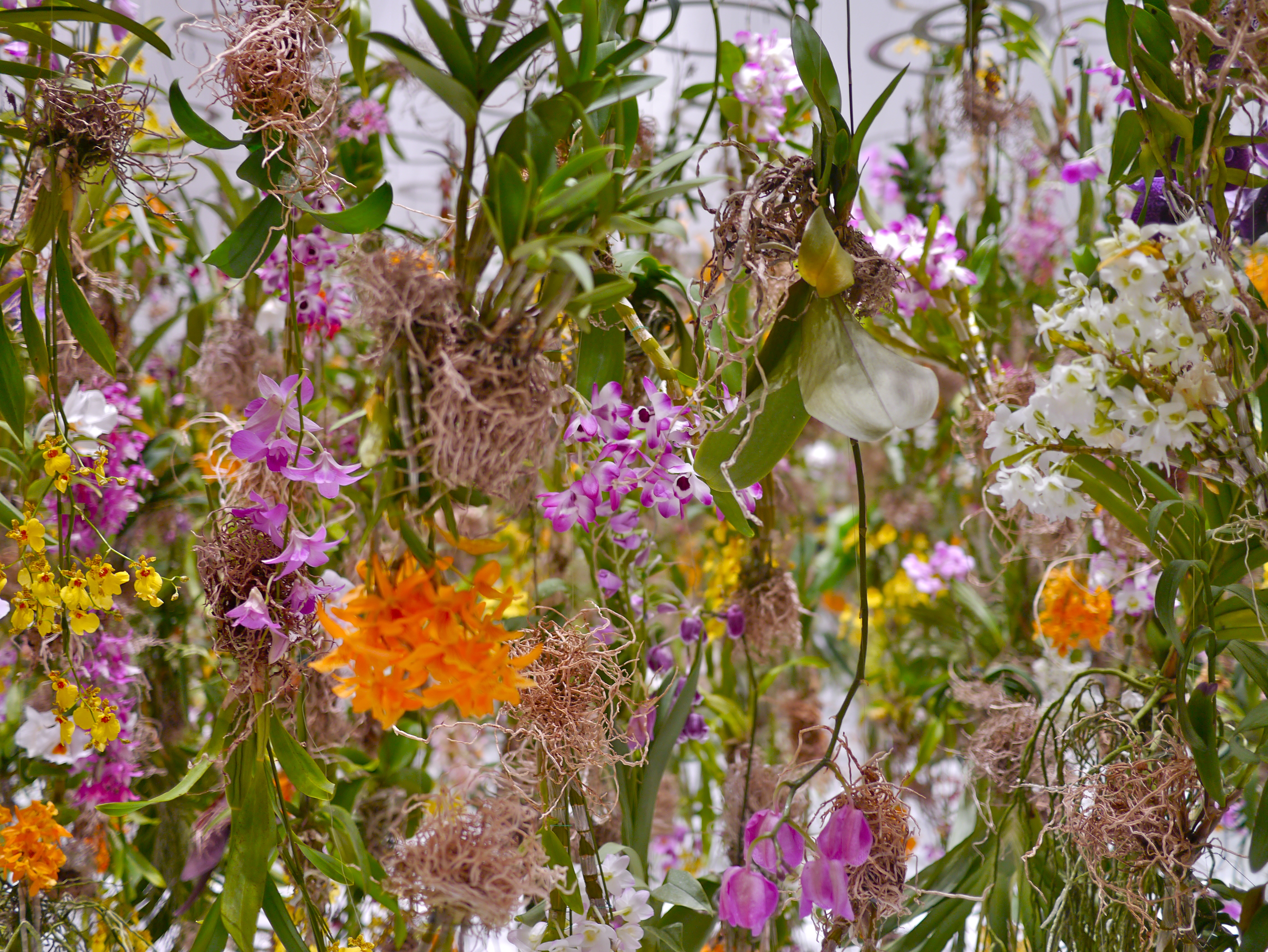 Floating Flower Garden   From My Wandering Mind