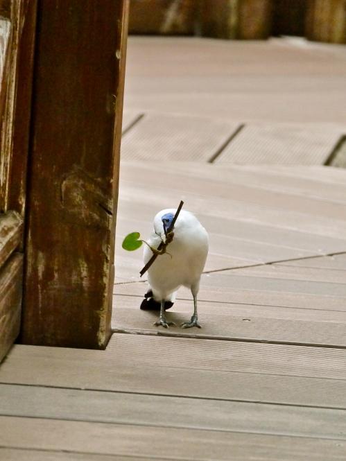 I haz a stick?